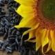 Биотопливо из подсолнечника